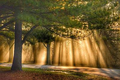Photograph - January Sunbeams by Sumoflam Photography
