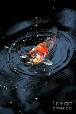 Photograph - Japanes Koi by Ben Johnson