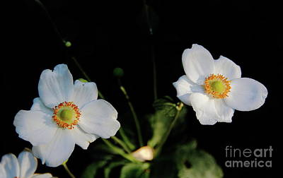 Photograph - Japanese Anemone Flower by Allen Nice-Webb