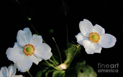 Photograph - Japanese Anemone Flower by Allen Nice-Webb