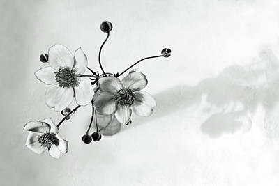 Photograph - Japanese Anemone In Black And White by Brooke T Ryan