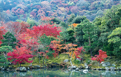 Red Tree Photograph - Japanese Autumn Garden by Lise-Lotte Larsson