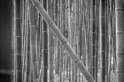 Photograph - Japanese Bamboo by Erika Gentry