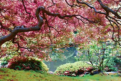 Photograph - Japanese Burgundy Maple Tree by Athena Mckinzie