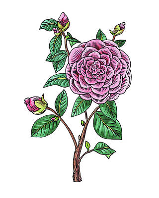 Painting - Japanese Camellia Flower Watercolor by Irina Sztukowski