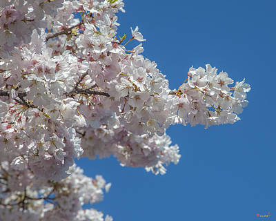 Photograph - Japanese Cherry Tree Blossoms On The Tidal Basin Ds0082 by Gerry Gantt