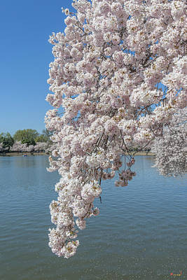 Photograph - Japanese Cherry Tree Blossoms Over The Tidal Basin Ds0084 by Gerry Gantt