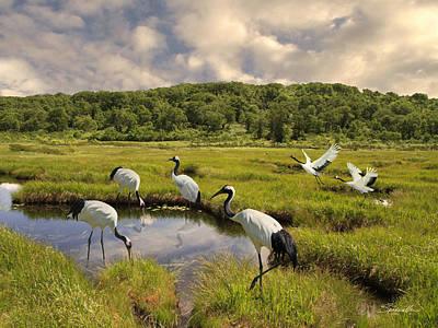 Digital Art - Japanese Cranes In The Hokkaido Wetlands by IM Spadecaller