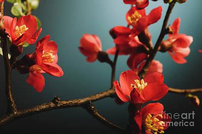 Japanese Flower Art Print by Jelena Jovanovic