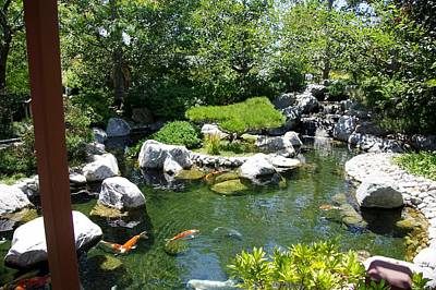 Photograph - Koi Pond 4 Japanese Friendship Garden by Phyllis Spoor