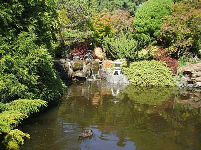 Japanese Garden At The Botanical Gardens In Hobart Tasmanis Art Print by Bethwyn Mills