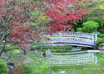Japanese Garden Bridge In Springtime Art Print by Carol Groenen