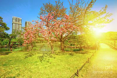 Japanese Garden Cherry Blossom Art Print