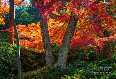 Fall Foliage Photograph - Japanese Garden Grove by Inge Johnsson