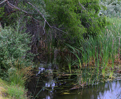 Photograph - Japanese Garden Marsh by Jeanette C Landstrom
