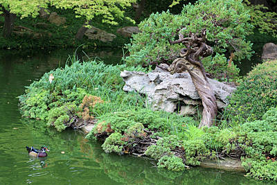 Photograph - Japanese Gardens - Saturday Afternoon 01 by Pamela Critchlow