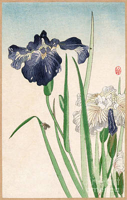Photograph - Japanese Irises by Granger