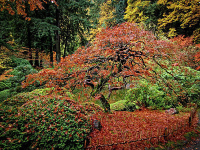 Print featuring the photograph Japanese Maple At The Japanese Gardens Portland by Thom Zehrfeld