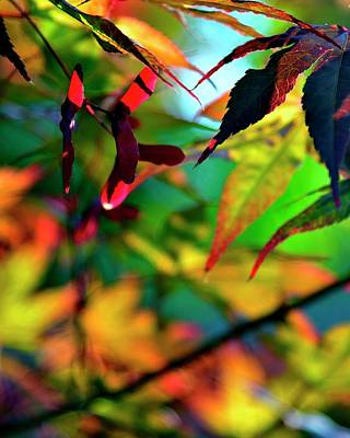 Photograph - Japanese Maple Autumn by Jerry Sodorff