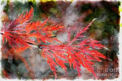 Digital Art - Japanese Maple - Digital Paint by Debbie Portwood