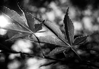 Photograph - Japanese Maple Leaf In Black And White by Chrystal Mimbs