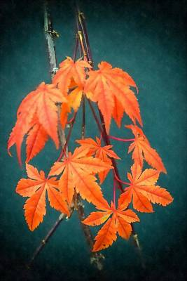 Photograph - Japanese Maple Leaves by Frank Wilson