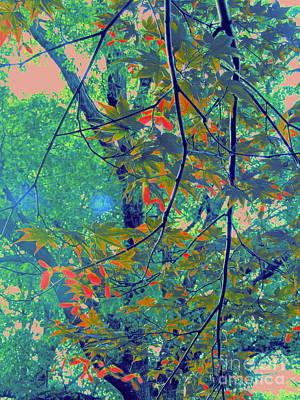 Photograph - Japanese Maple Recolored by Nancy Kane Chapman