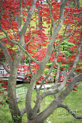 Photograph - Japanese Maple Tree And Pond by Carol Groenen