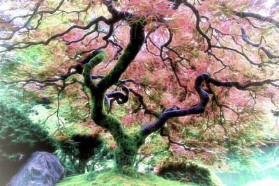 Photograph - Japanese Maple Tree In Spring by Athena Mckinzie