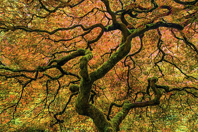 Colorful Photograph - Japanese Maple Tree by Larry Marshall