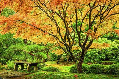 Photograph - Japanese Maple Tree  by Mihai Andritoiu