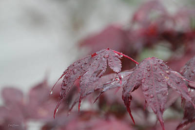 Photograph - Japanese Maple Water Drops 8719 by Ericamaxine Price