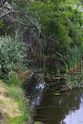 Photograph - Japanese Peace Garden Marsh by Jeanette C Landstrom