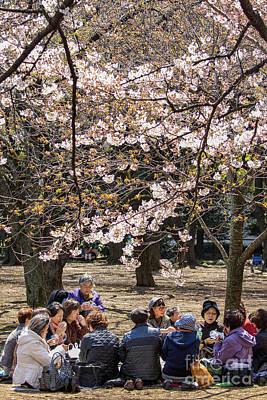 Tea Tree Flower Photograph - Japanese Women Drinking Tea Under Cherry Blossom by Patricia Hofmeester