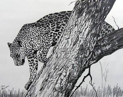 Jaquar In Tree Art Print by Stan Hamilton