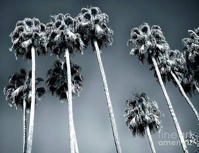 Photograph - Jardines De Murillo Palm Trees by John Rizzuto