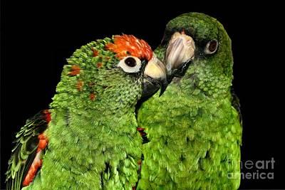 Photograph - Jardines Parrots by Debbie Stahre