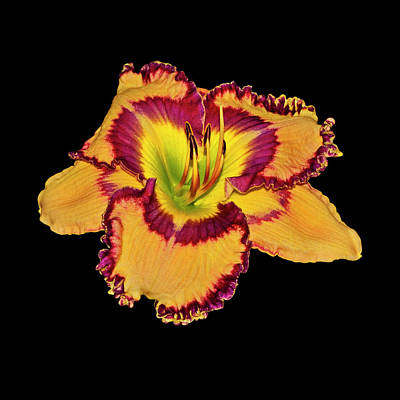 Photograph - Jared Timothy Bell Daylily 001 by George Bostian