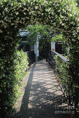 Savannah Dreamy Photograph - Jasmine Arch In Savannah by Carol Groenen