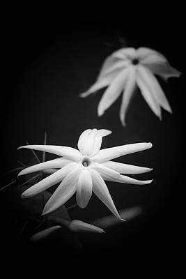 Photograph - Jasmine by Cristina Stefan