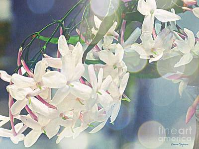 Photograph - Jasmine In Bokeh  by Leanne Seymour