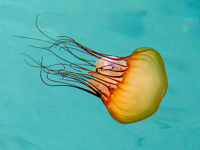 Photograph - Jasmine The Jelly by Derek Dean