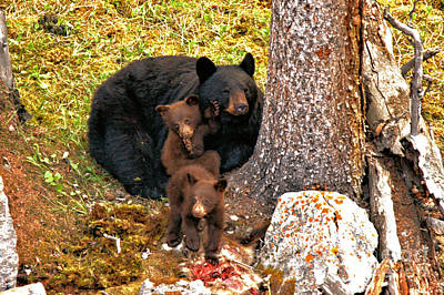 Photograph - Jasper Black Bear Family Feast by Adam Jewell
