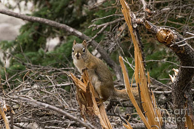 Photograph - Jasper Squirrel by Louise Magno