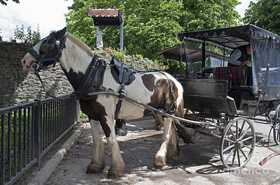 Photograph - Jaunting Cart Killarney Ireland by Cindy Murphy - NightVisions
