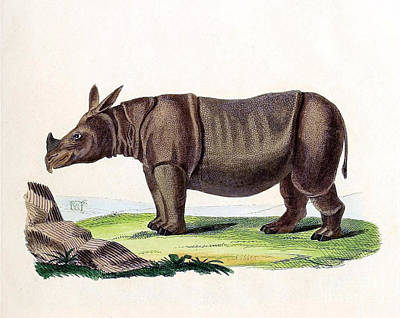 Javan Rhinoceros, Endangered Species Art Print by Biodiversity Heritage Library