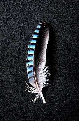 Photograph - Jay Feather 1 Without Text by Weston Westmoreland