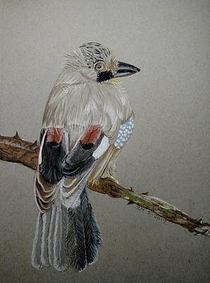 Pastel - Jay by Joan Mansson
