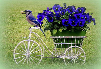 Bluejay Photograph - Jay's Flower Cart by Karen Cook