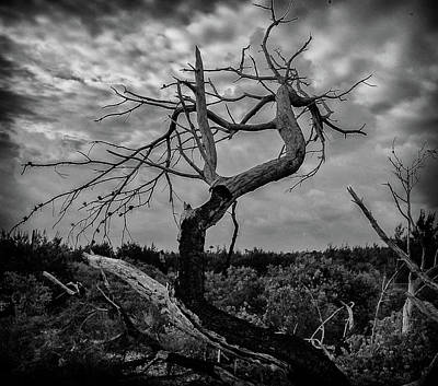 Photograph - J.d. Tree 1 by Michael Raiman